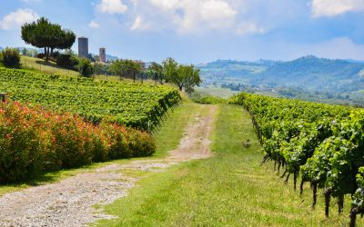 ON THE ROAD OF THE GREAT WINE OF OLTREPÒ PAVESE