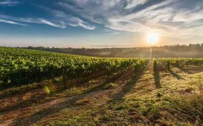 INTESA SANPAOLO AND CONSORZIO TUTELA OLTREPÒ PAVESE TOGETHER TO RELAUNCH THE WINE SECTOR