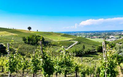 SOFT PROMOTION PROSPECTS FOR OLTREPÒ WINE